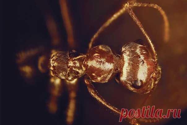 Ученый побрил сахарского муравья и выяснил, как эти насекомые приспособились к чудовищной жаре, от которой плавятся подошвы.