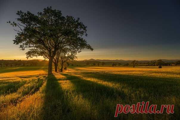 Золото Шотландии Автор снимка – Алексей Емельянов: Спокойной ночи.