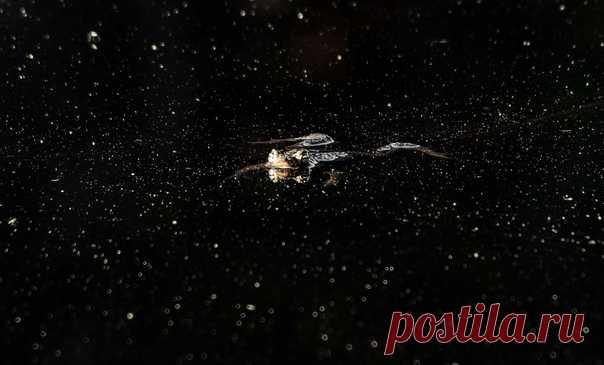 Звёздная лягушка. Фотографировал Виктор Квасов – nat-geo.ru/photo/user/325661/