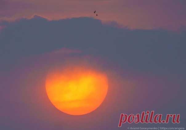 Рассвет в джунглях Непала. Снимок Арсения Герасименко (nat-geo.ru/community/user/49941/). Доброе утро!