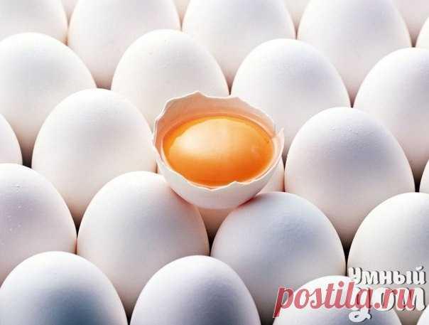 9 золотых советов по приготовлению яиц