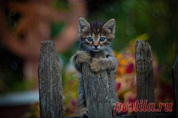 Завтра в «Фотофактуре» пройдет выставка кошек из московских приютов. Вход на выставку свободный – приходите посмотреть на 60 красавцев и, возможно, кто-то из них станет членом вашей семьи.