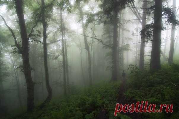 Туманные дебри. Карпаты. Автор фото – Александр Дишливенко: nat-geo.ru/photo/user/116777/