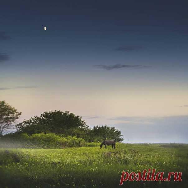 Коня на фоне лунного пейзажа сфотографировала Анна Телкова: nat-geo.ru/photo/user/291747/ Доброй ночи!