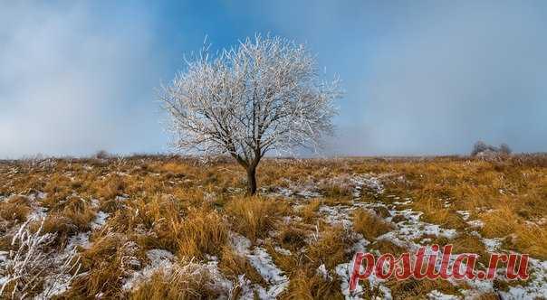 Иней в ставропольской степи. Автор фото – Федор Лашков: nat-geo.ru/photo/user/27510/