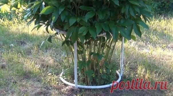 Конструкция для подвязки пионов - Садоводка