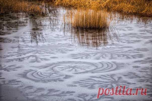 «Мороз-художник» Причудливые узоры на молодом льду – работа подземных ключей, которые пытаются прорваться через тонкую кромку. Автор фото – Павел Сагайдак: nat-geo.ru/community/user/27069 💙