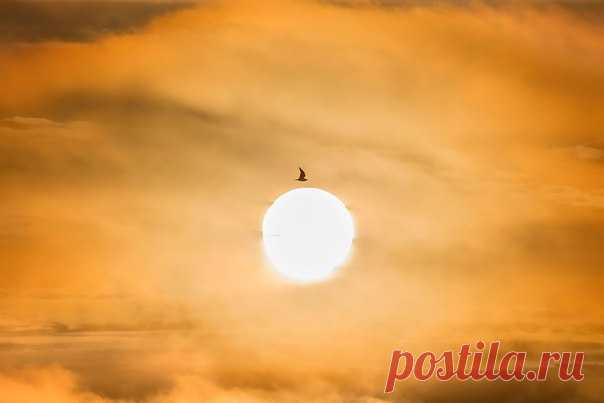 Палящее солнце Арктики. Земля Франца-Иосифа. Автор фото – Андрей Паршин: nat-geo.ru/photo/user/164226/