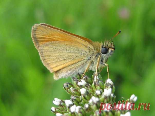 Si la oruga se tenía por pasado, se haría nunca la mariposa.