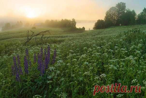 Заброшенная деревня Сидозеро, Ленинградская область. Автор фото: Петр Косых.