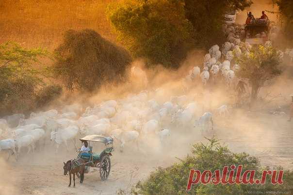 «Рабочий день подошел к концу». Баган, Мьянма. Фотограф – Владимир Куцый: