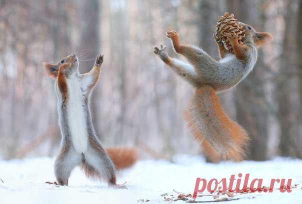 Как развлекаются воронежские белки – смотрите в фотосессии талантливого российского фотографа Вадима Трунова