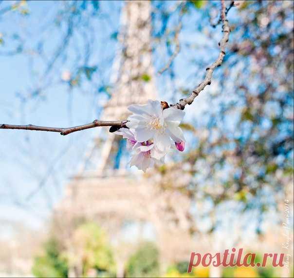 Весенний Париж на фото Алексея Круглова: Доброе утро!
