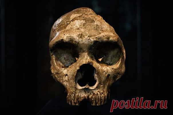 Зубной камень — важная улика! Он помнит, что его хозяин, например, ел мясо носорога с гарниром из грибов, а еще (сам того не ведая) лечился пенициллом. А о чем расскажут потомкам наши зубки?
