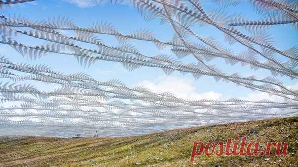 Самые разные птицы, от полярных крачек до черных стрижей, выписывают в полете фантастические узоры — их сумел запечатлеть фотограф Ксави Боу.