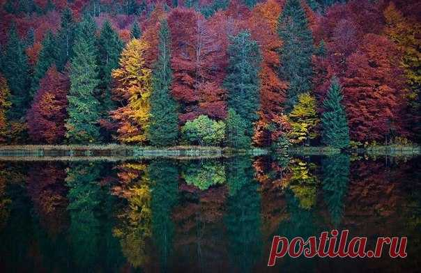 Осенний лес на одном из озер Аляски