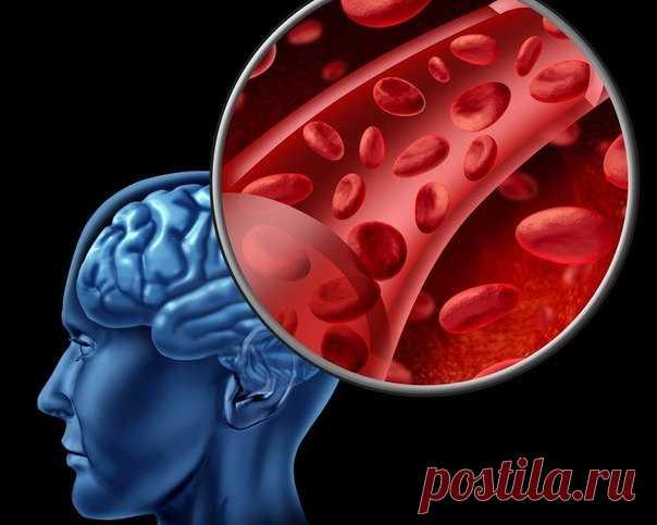 FOLK REMEDIES FOR IMPROVEMENT OF BRAIN BLOOD CIRCULATION.