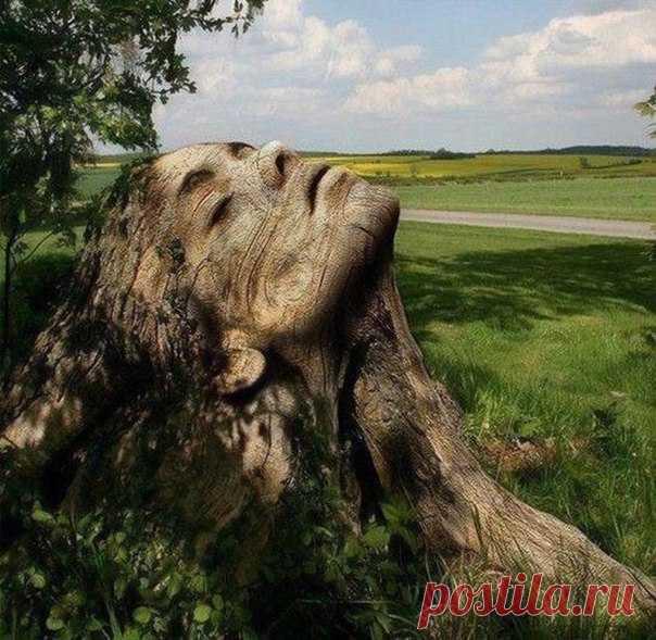 ¡Es cortado del árbol viejo!