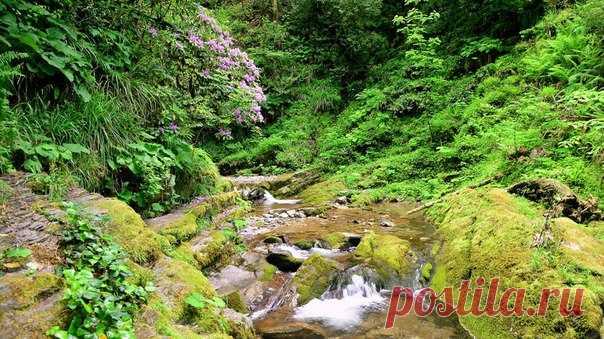 Цветущий Рододендрон высоко в горах Краснодарского края .... 😌❤