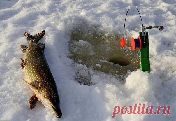 La caza en invierno del gran lucio en zherlitsy \/ la extracción Rica