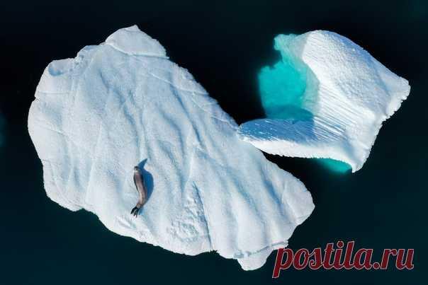 С добрым утром! Вот вам морской леопард, который греется на айсберге. Снимок из альбома Дмитрия Коха – nat-geo.ru/community/user/218077.
