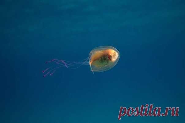 Симпатии большинства – на стороне рыбки, но представьте, каково было медузе.