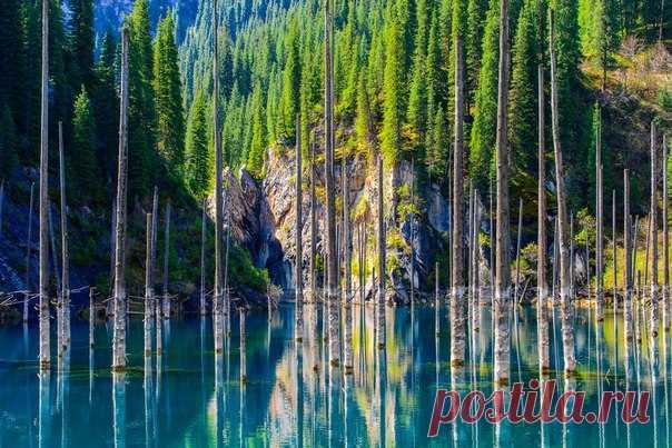 «Утонувший лес». Озеро Каинды. Автор фото — Алексей Пехтерев, участник фотоконкурса «Казахстан — энергия будущего»: