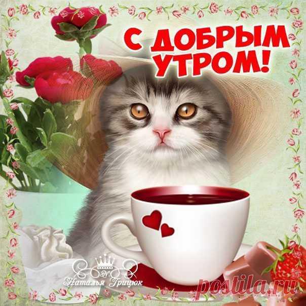 Открытки с добрым утром с котиками