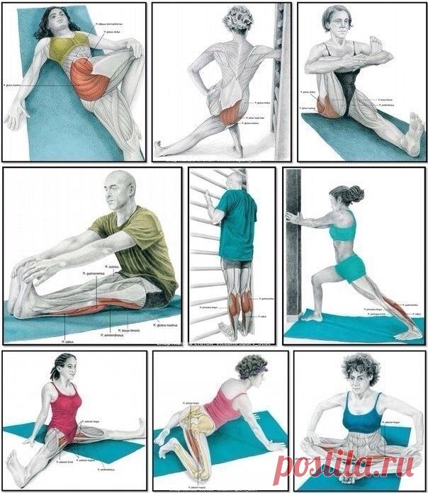 Растяжка мышц в домашних условиях с картинками