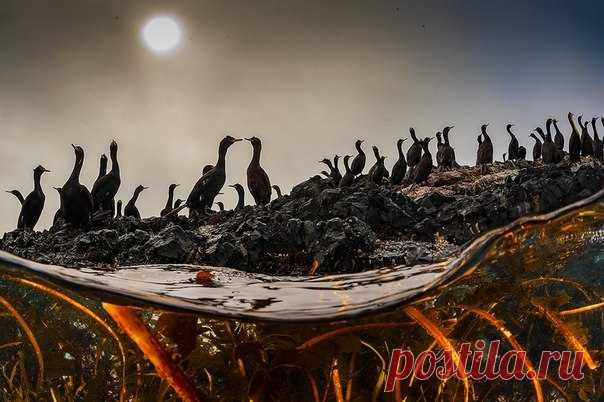«Свидание в толпе» Бакланы греются на скалистых берегах острова Беринга и сушат оперение после долгой рыбалки. Автор фото – Андрей Сидоров: nat-geo.ru/photo/user/31857/