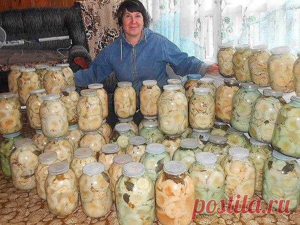 Вкусная засолка груздей  Наверное трудно найти такого человека, который не любит соленых или маринованных грибов.. Многие  хозяйки для заготовки грибов на зиму выбирают именно грузди, и это  совершенно не удивительно, так ка…