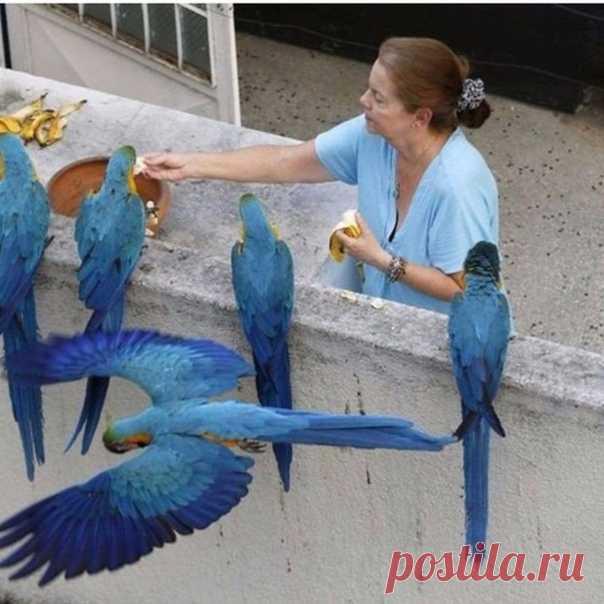 В каждой стране свои голуби)