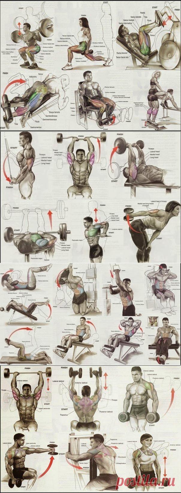 снятие параметров комплекс упражнений на все группы мышц фото самого начала
