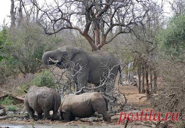 Ботсвана станет первой в мире страной, где будет использоваться SPOT – система, позволяющая за 0,3 секунды вычислить браконьера на охраняемой территории.