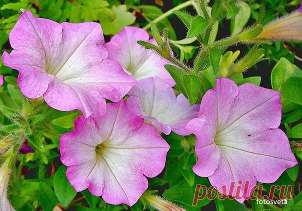 Цветы - неиссякаемый источник вдохновения...