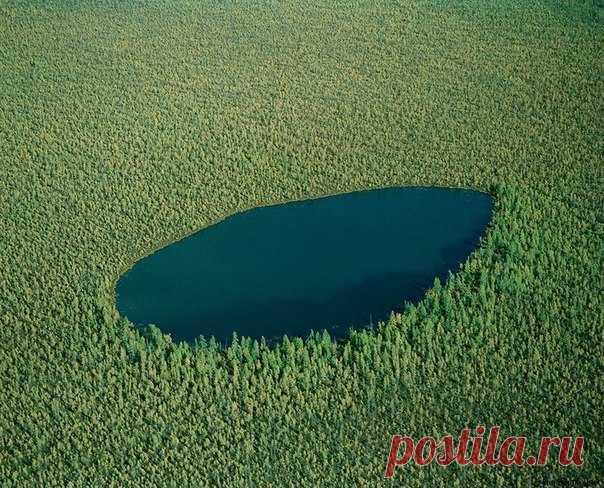 Лесное озеро в Сибири