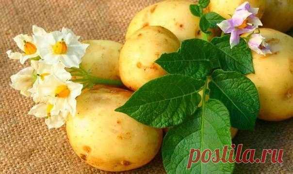 Молодой картофель - рецепты красоты.