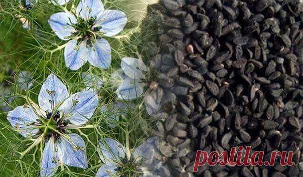 Черный тмин от всех болезней. Диабет, бессонница, простуда, паразиты… - http://krasotaotzdoroviya.ru/chernyj-tmin/  В настоящее время популярность однолетнего травянистого растения Nigella Sativa или Чернушки, а точнее — его семян значительно возросла.  Это не удивительно, поскольку целебные свойства нигеллы известны с незапамятных времен отсутствием побочных эффектов, которые присущи синтетическим лекарственным средствам, а, особенно, антибиотикам. Показать полностью…