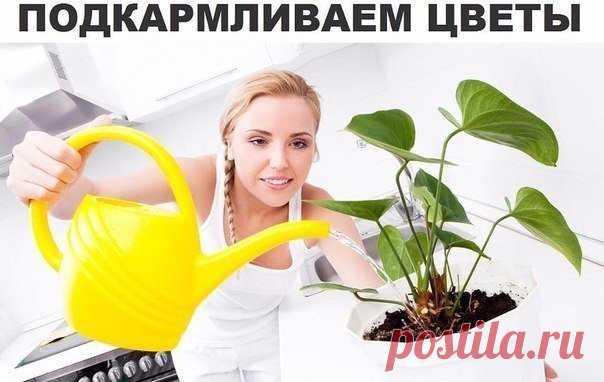 Подкармливаем цветы Секрет роскошного комнатного цветника прост: растения нужно хорошо подкармливать, иначе не дождаться ни пышной листвы, ни хорошего цветения. Жесткая «диета», когда растение длительное время испытывает нехватку питательных веществ, обычно приводит к заболеванию – ведь сил для сопротивления у растения нет. Но как правильно составить меню для зеленых питомцев, учитывая их разные вкусы?1. Практически все растения […]