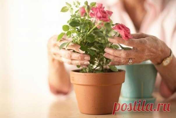 Какие цветы нужно держать дома, если… / Лаборатория Рукоделия