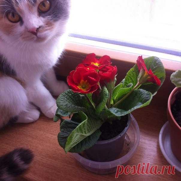 Вопрос♥ Ответ Подскажите, пожалуйста, название цветка 🌺