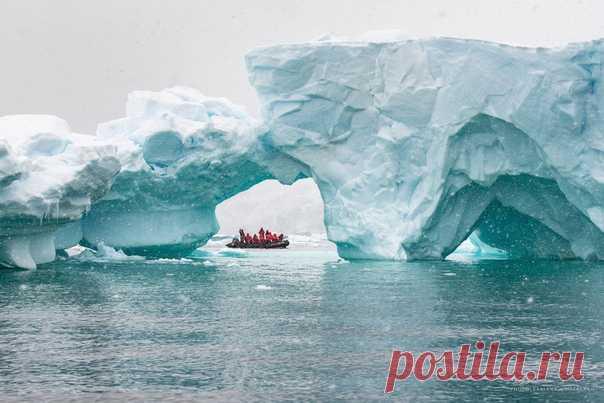 «Антарктида – континент с самым холодным климатом на Земле. На восточном Антарктическом плато температура может опускаться до минус 98 градусов. Я не была на полюсе холода, но вступить на седьмой континент мне все-таки посчастливилось. И пройтись на зодиаке по антарктическим водам среди причудливых льдин и огромных айсбергов. Погода не позволила показать айсберги в полной красе, но это Антарктика!» – делится Татьяна Дударенко, nat-geo.ru/community/user/214584