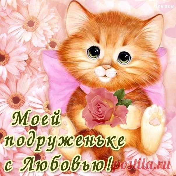 Смотреть картинки подруге, картинки коты