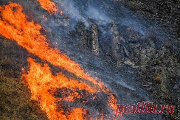 С начала года в России было зафиксировано более 600 пожаров, охвативших площадь более 240 тысяч гектаров.