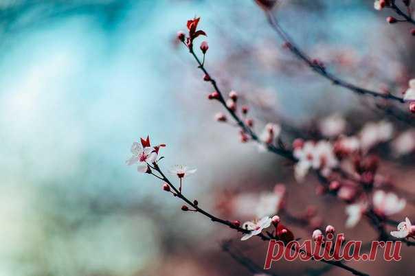 Чуть не забыли вас поздравить: сегодня же в Северном полушарии официально наступила весна!