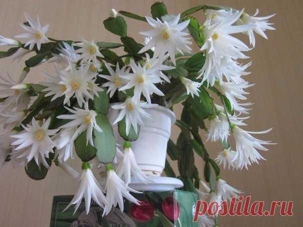 МАЛЕНЬКАЯ ХИТРОСТЬ: ЧТОБЫ ЦВЕТЫ В ДОМЕ ЦВЕЛИ ПЫШНО И ДОЛГО!  Давно ли Ваш любимый цветок цвел, как в магазине цветов, не помните? Вот и я уже почти позабыла. Вроде и подкармливаю его, а он все не радует пышным цветением.  Но вот недавно зашла в гости к подруге, а у неё цветы просто загляденье, все цветут, как на подбор. Как же так? Оказывается есть одна маленькая хитрость, для того чтобы цветок цвел пышно и долго нужна специальная подкормка. Секрет её прост и доступен, дел...
