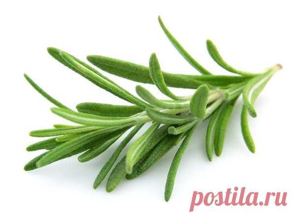 Rosemary against vascular asterisks