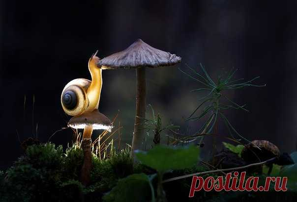 «Лесной электрик» Привет из лета от фотографа Евгения Анатольевича: nat-geo.ru/photo/user/296175/