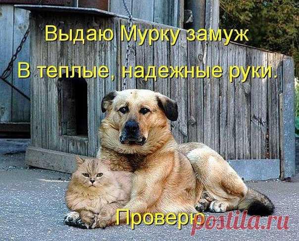 ВЫДАЮ МУРКУ ЗАМУЖ | KotoMail.ru