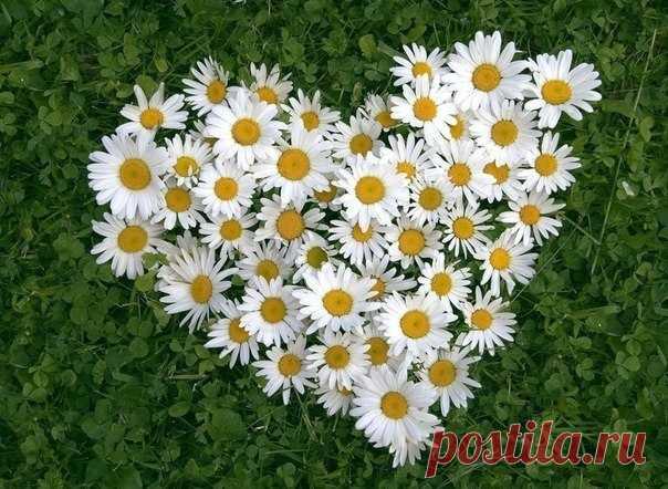 Трепещет нежная душа,Как лепесток прекрасной розы... - Поиск в Google